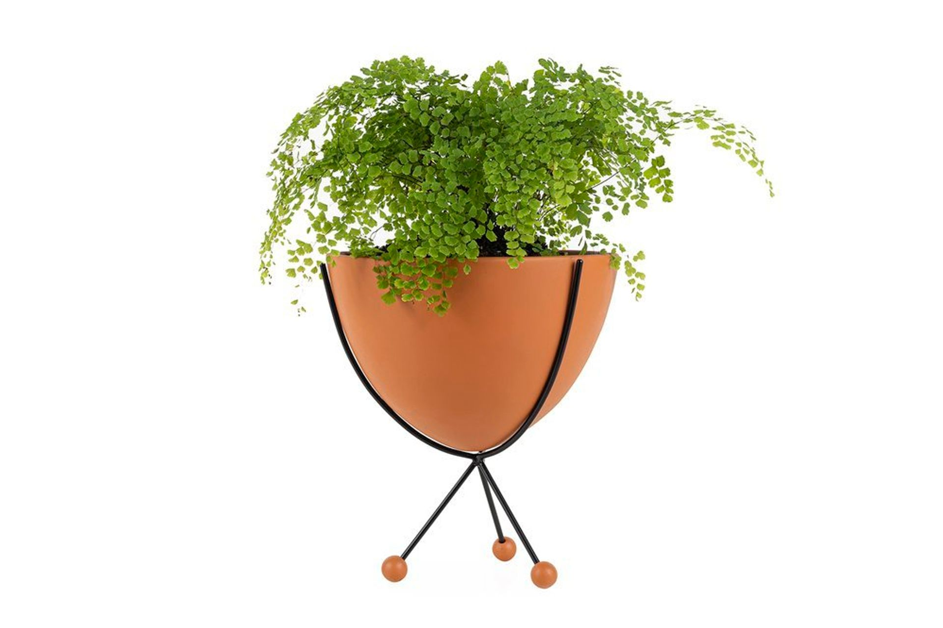 Glee Planter, Medium