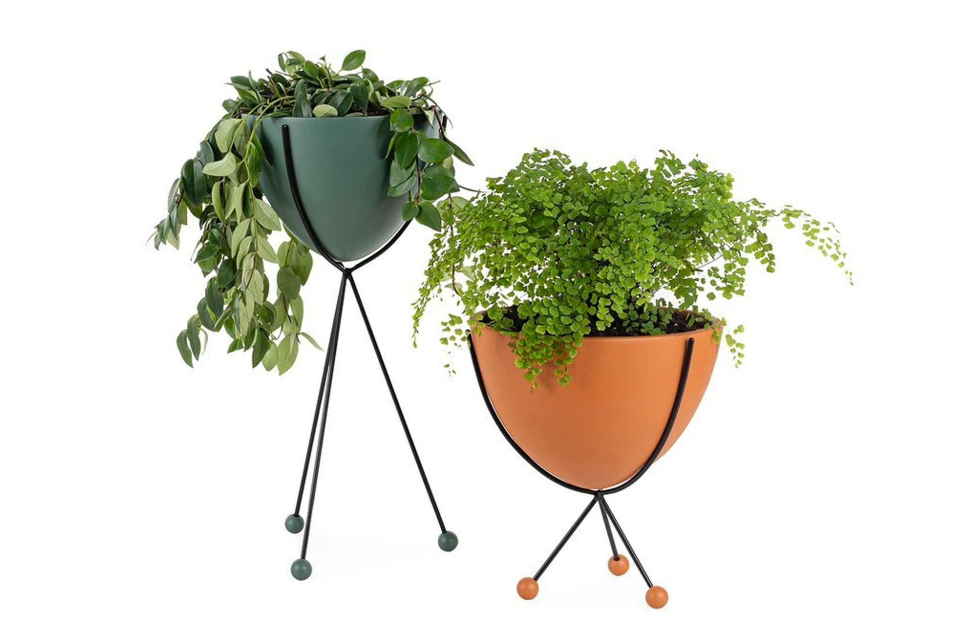Glee Planter, Large